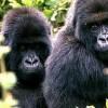 Le Gabon veut développer son industrie touristique