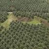 Gabon : Olam devrait consolider les projets engagés en 2011